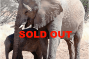 Namibia 2017July 12 – 27  SOLD OUT